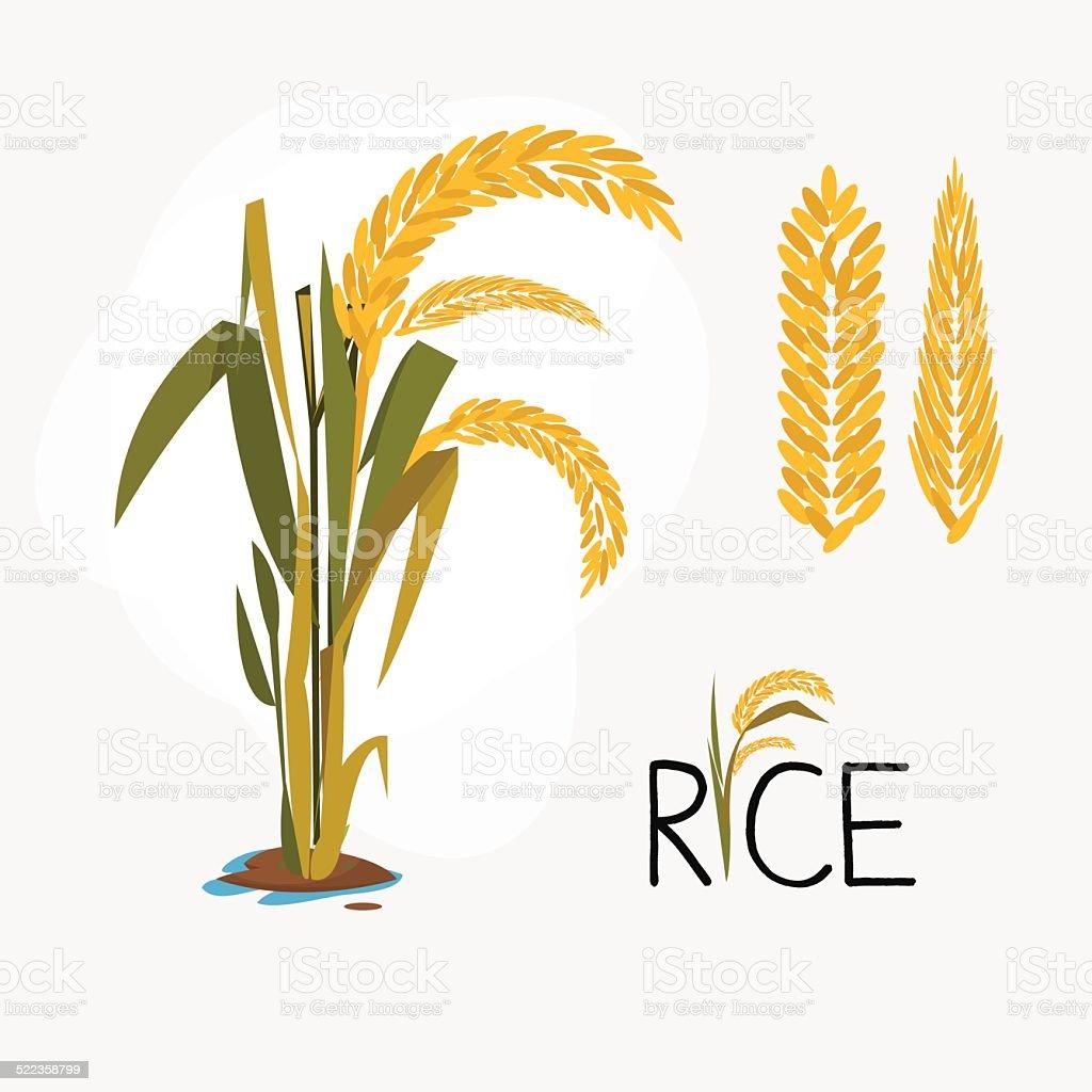 rice set. letter - vector illustration vector art illustration