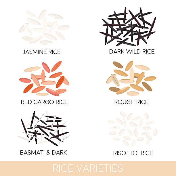 illustrations, cliparts, dessins animés et icônes de variétés de riz. riz sauvage foncé, risotto du riz au jasmin, du riz basmati, - risotto