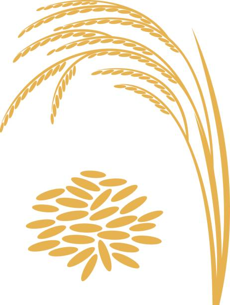 Royalty Free Rice Stalk Clip Art, Vector Images ...