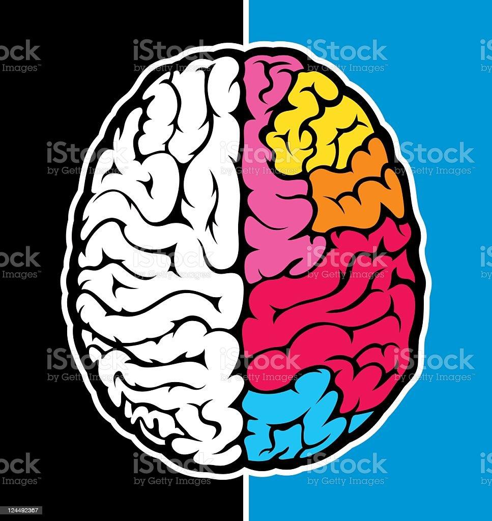 Right brain royalty-free stock vector art
