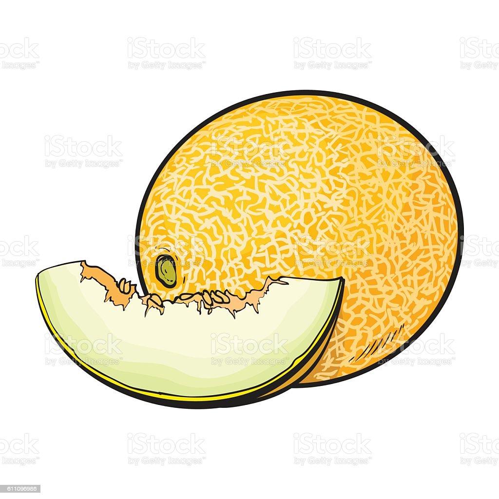 Royalty Free Honeydew Melon Clip Art, Vector Images ... Honeydew Melon Clip Art