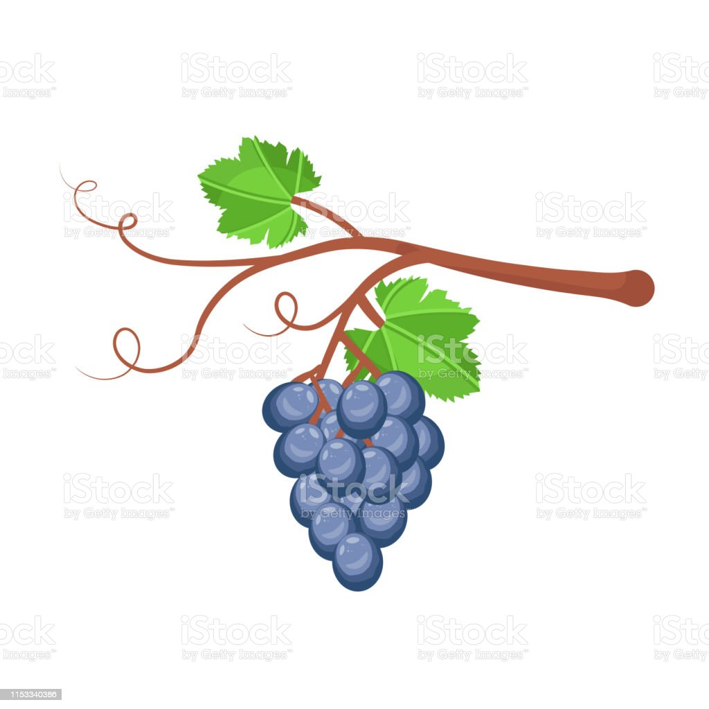 Ripe grape vector illustration. Organic jam tag. Summer seasonal...
