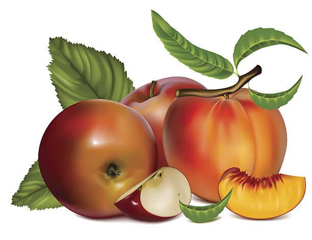 reife pfirsich und apple. - nektarinenmarmelade stock-grafiken, -clipart, -cartoons und -symbole