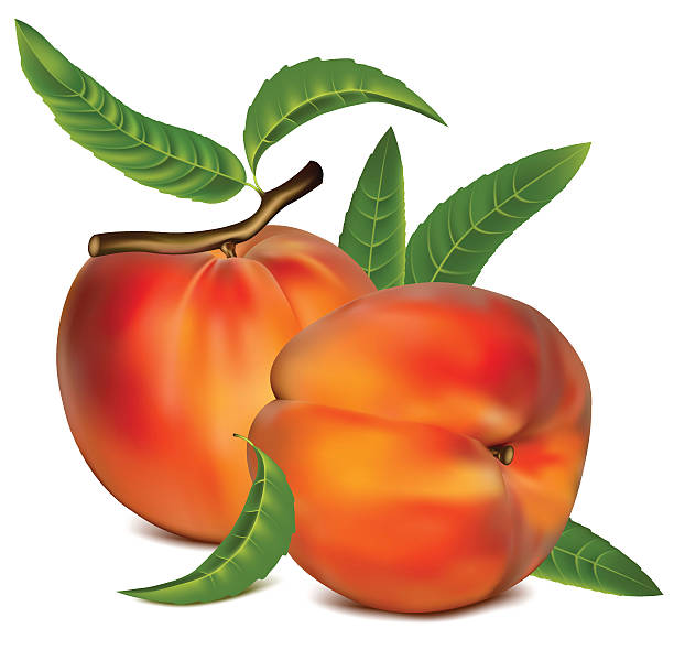 reife pfirsich früchte mit grünen blättern. - nektarinenmarmelade stock-grafiken, -clipart, -cartoons und -symbole