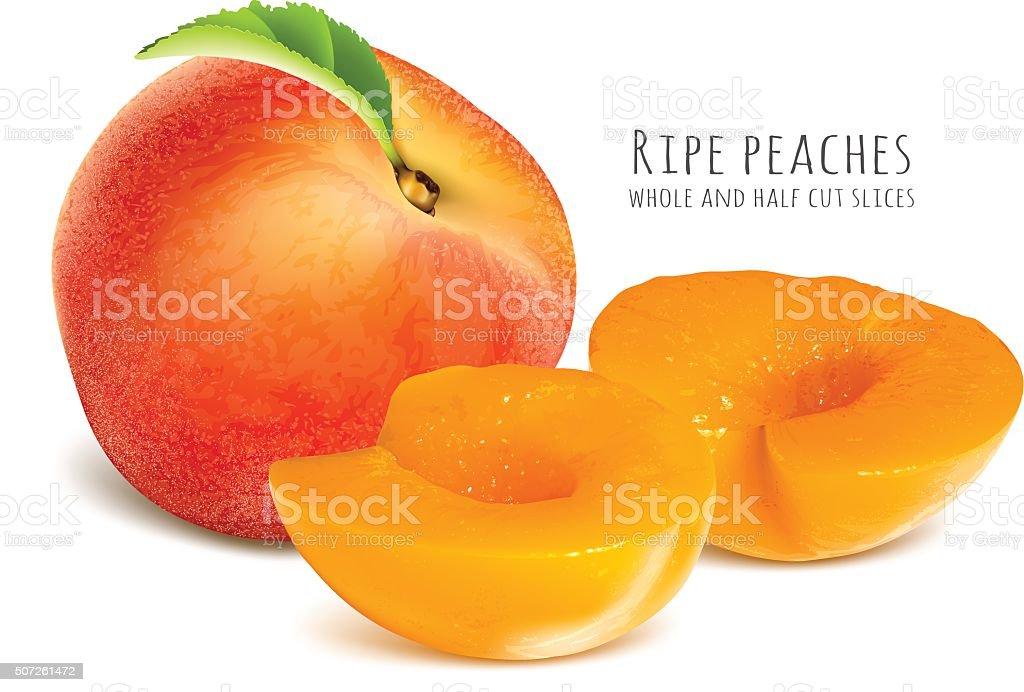 Ripe peaches, whole and half cut slices. vector art illustration
