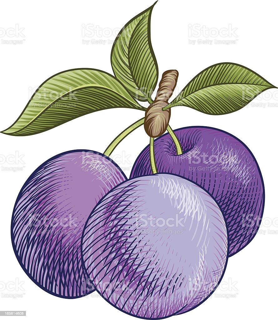 Ripe plum vector art illustration
