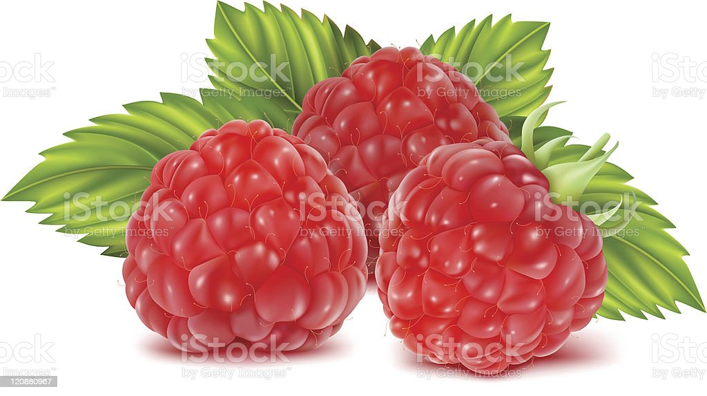 Ripe raspberries. vector art illustration