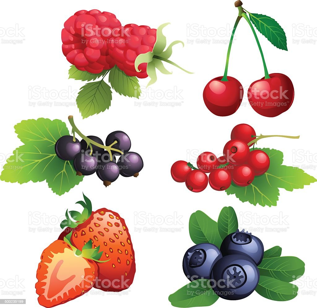 Ripe strawberry, raspberry, cherry, blackberry, black and red cu vector art illustration