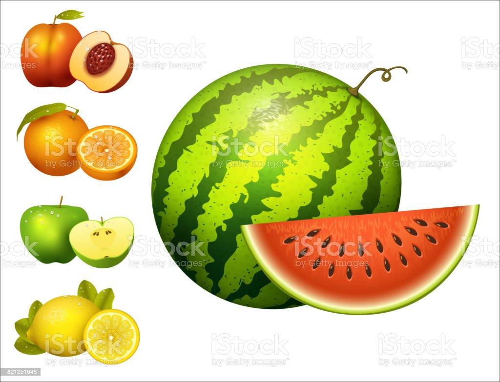 ripe striped watermelon realistic juicy fruits slice apple vector