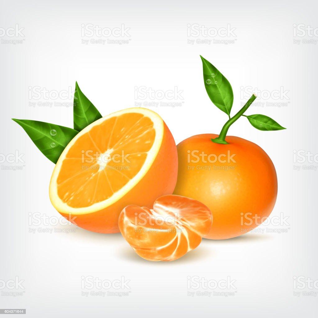 Ripe tangerines and orange fruit vector art illustration