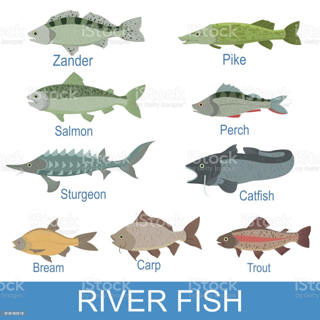 River fish identification slate with names stock vector for Ocean fish names