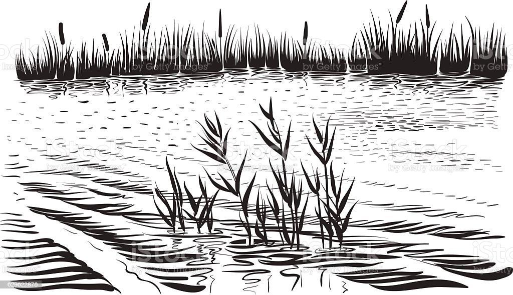River landscape with aquatic plants, hand drawn vector. vector art illustration
