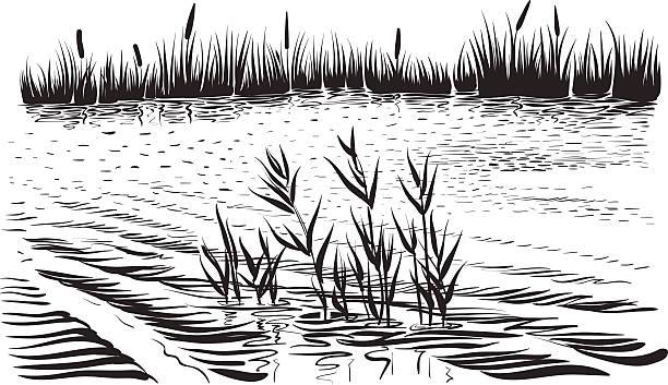 stockillustraties, clipart, cartoons en iconen met river landscape with aquatic plants, hand drawn vector. - wildplassen