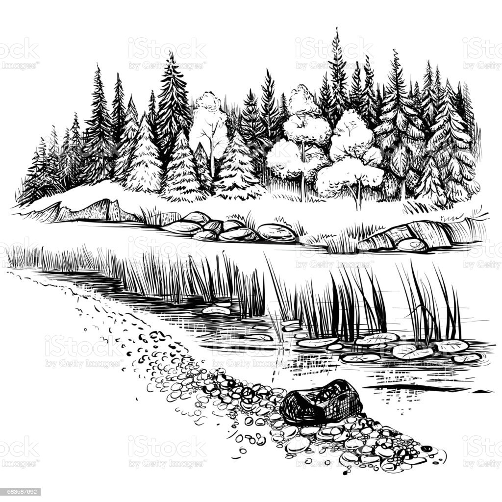 River landscape with conifer forest. Vector illustration. vector art illustration