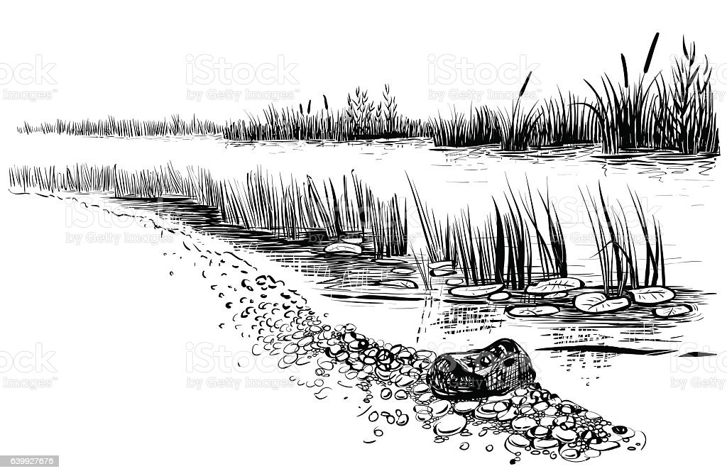 River landscape with reed and cattail. vector art illustration