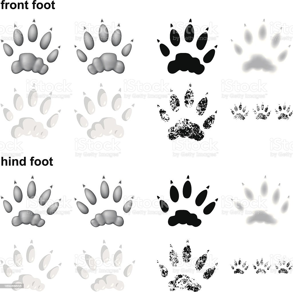 River Otter Footprints Stock Vector Art & More Images of Animal ...