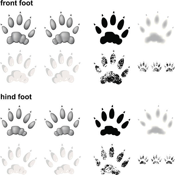river otter footprints - otter stock illustrations, clip art, cartoons, & icons