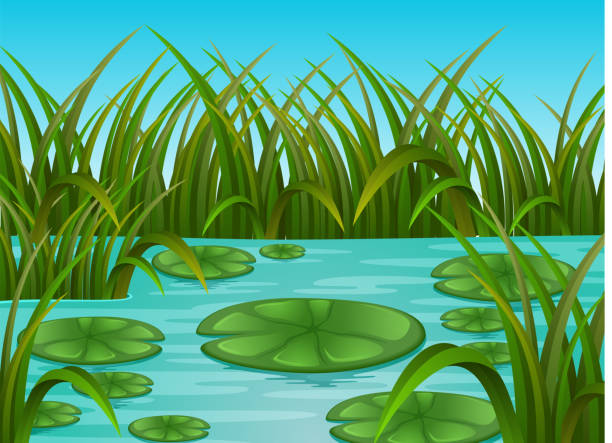 river scene and water lily in a beautiful nature - pond stock illustrations