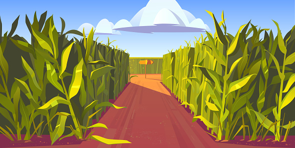 Road on cornfield with fork and direction sign