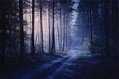 Scary road through night forest. Vector.