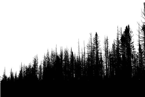 Roadside Winter Trees vector art illustration