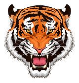 Stylized roaring tiger head isolated on white background