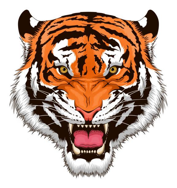 illustrations, cliparts, dessins animés et icônes de tête de tigre rugissante - tigre