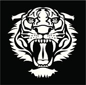 Roaring white tiger vector over black background