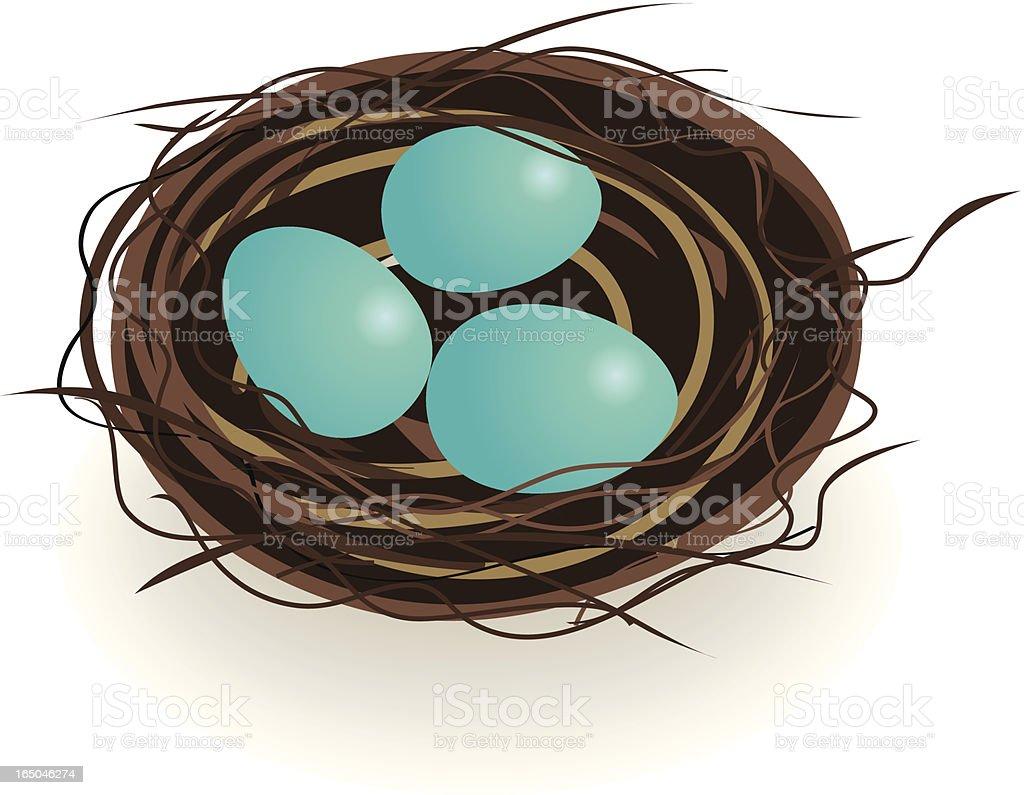 Robin Eggs in nest vector art illustration