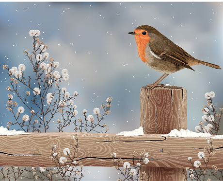 Robin on a Winter Day