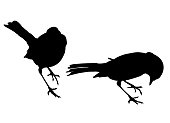 Two robin shape vectors, black silhouettes on a plain white background.