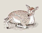 A roe deer is lying