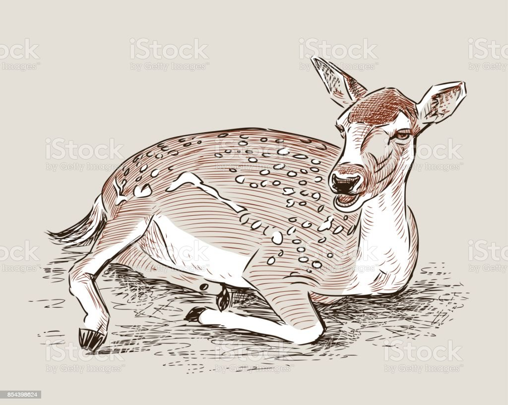 A roe deer is lying vector art illustration