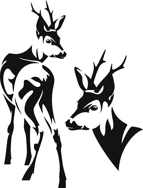 reh - reh stock-grafiken, -clipart, -cartoons und -symbole