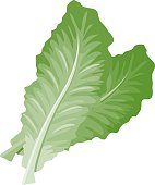 2 romaine lettuce leaves. No gradients were used when creating this illustration.