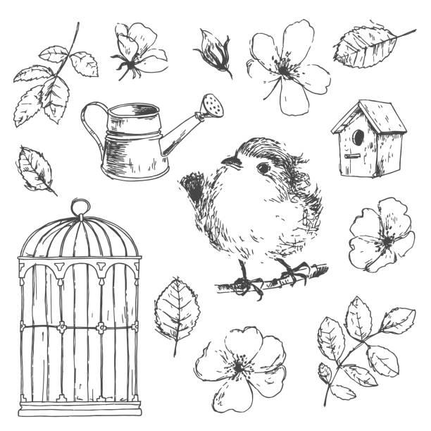 illustrations, cliparts, dessins animés et icônes de vector romantique main dessinée collection d'oiseaux, fleurs - dessin cage a oiseaux