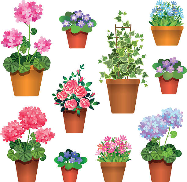 room flowers Set of  flowers in pots isolated on white. Icons for design illustration potted plant stock illustrations