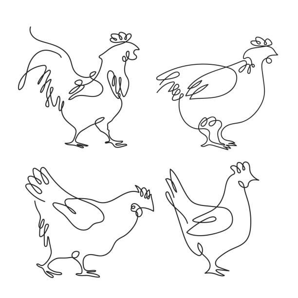 bildbanksillustrationer, clip art samt tecknat material och ikoner med tupp och höns dragna i en rad. fjäderfä. uppsättning minimalistiska illustrationer. - fjäderfä