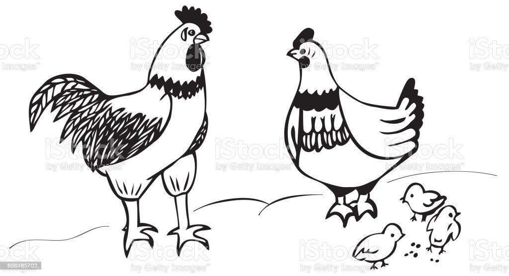 rooster chicken and Chicks vector art illustration