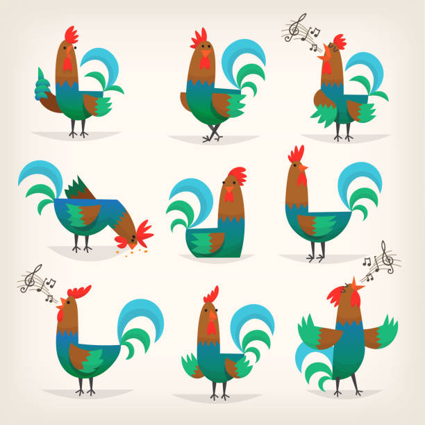Rooster from farm Rooster character from many fairy tales for children. Male chicken in different poses for greeting cards or posters in child's room rooster stock illustrations