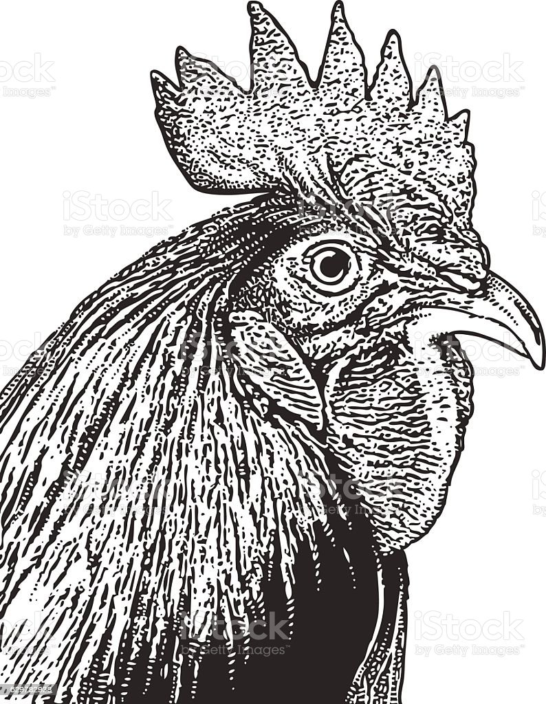 Rooster Head Engraving Stock Vector Art More Images Of Agriculture