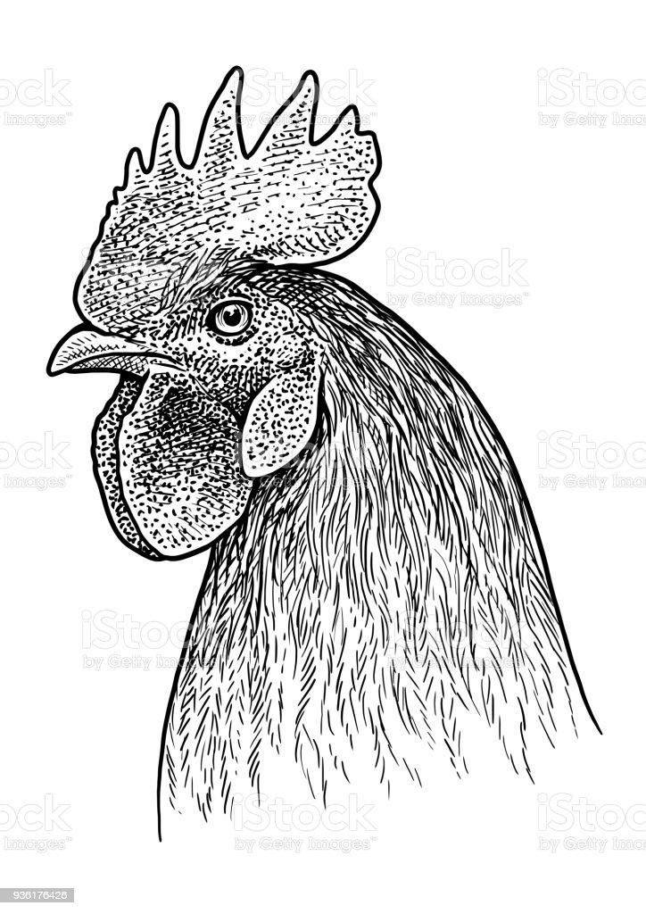 Rooster Head Portrait Illustration Drawing Engraving Ink Line Art