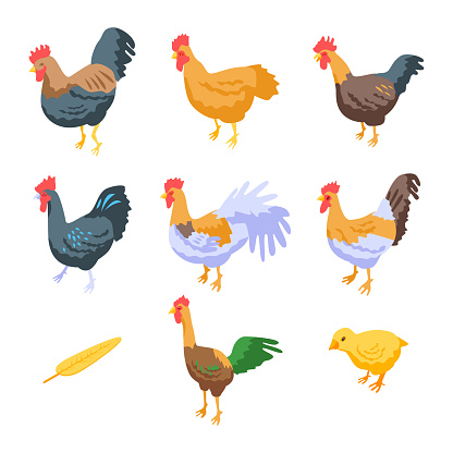 Rooster icons set, isometric style