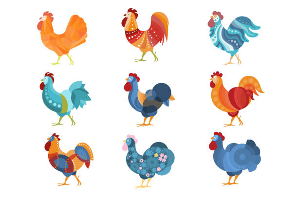 Rooster Similar Drawings Set Colored In Different Styles Rooster Similar Drawings Set Colored In Different Styles. Cool Graphic Design Farm Birds With Simple Bright Patterns. Stylized Flat Vector Illustrations Isolated On White Background. cockerel stock illustrations