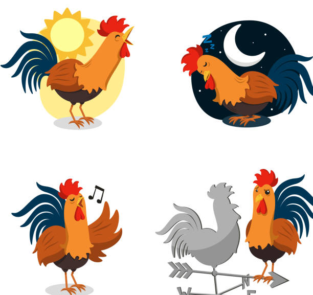 Rooster Singing Sleeping Dawn Weather-vein Set Rooster Set, with Singing Rooster, Sleeping Rooster, Rooster singing at Dawn and Rooster Staering at a Weather-vein Rooster. Vector illustration Cartoon Set rooster stock illustrations