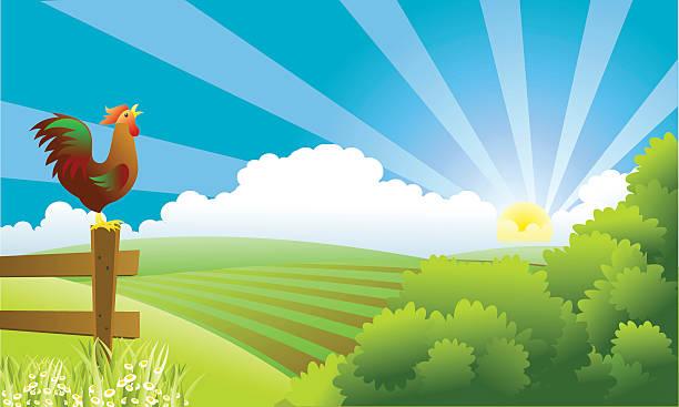 bildbanksillustrationer, clip art samt tecknat material och ikoner med rooster standing on fence post crowing as the sun rises - ungtupp