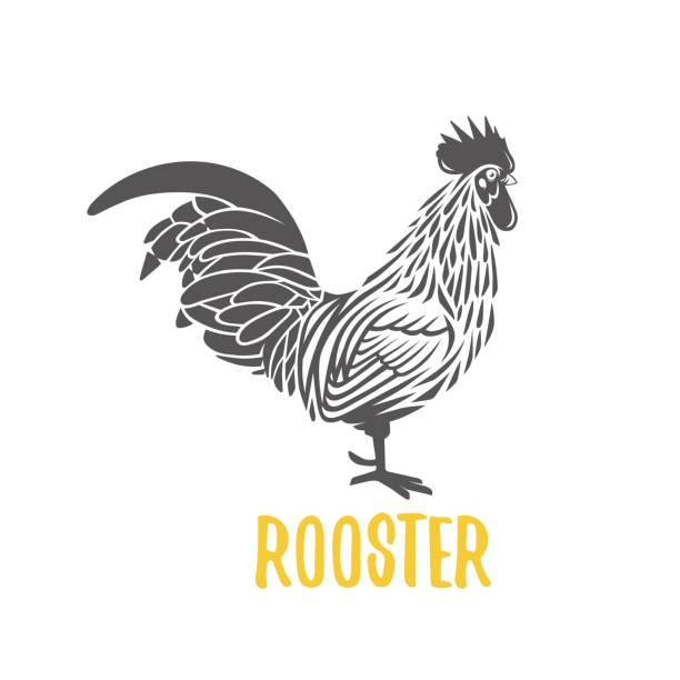 rooster. vector element for design, logotype and illustrations. - rooster stock illustrations, clip art, cartoons, & icons