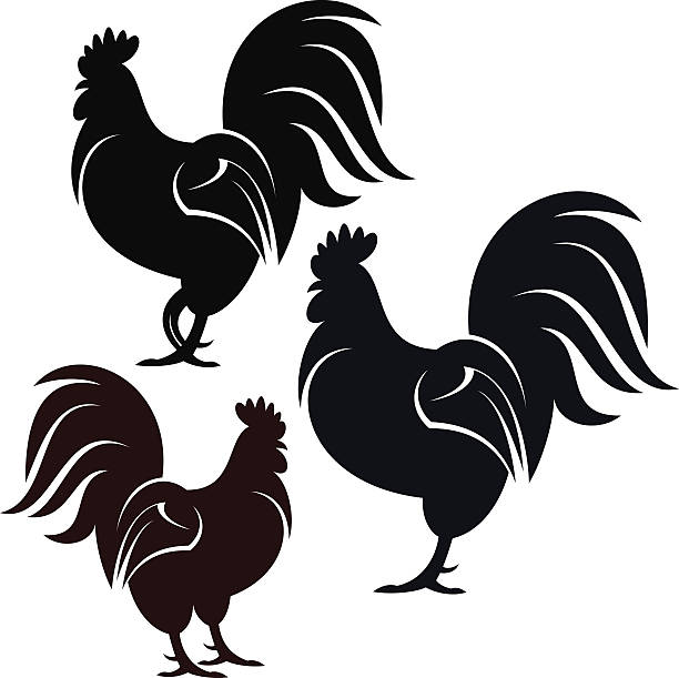 Rooster Vector illustration (EPS 10)  rooster stock illustrations