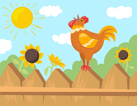 Rooster welcoming sun cartoon illustration