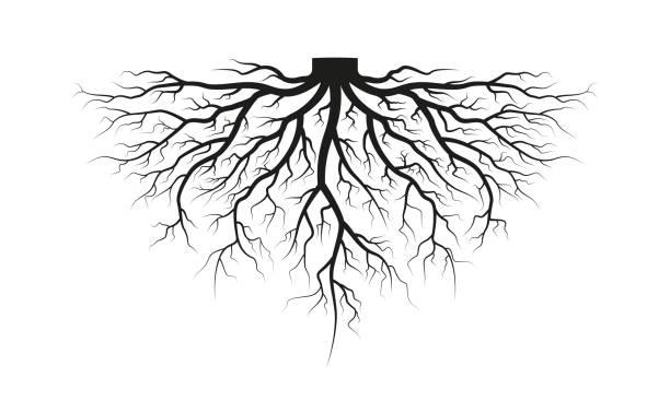 stockillustraties, clipart, cartoons en iconen met wortel van de boom. zwarte silhouet. vector illustratie. - wortel plantdeel